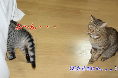 5_20100827004841.jpg