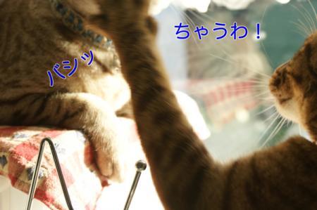 5_20100916083918.jpg