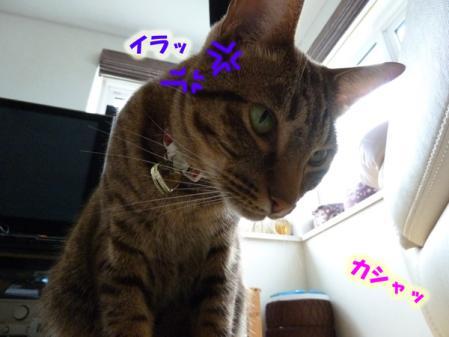 5_20100926223056.jpg