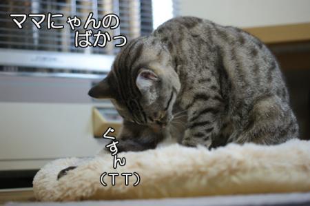 5_20101223075201.jpg