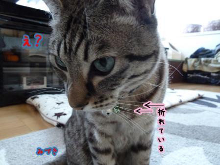 5_20110102080517.jpg