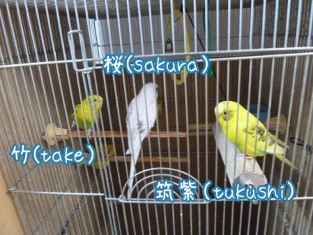 5_20110118121824.jpg