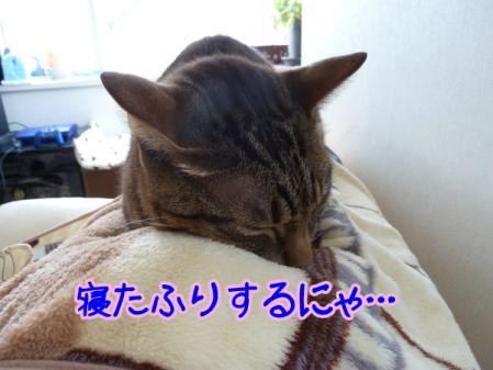 5_20110126110058.jpg