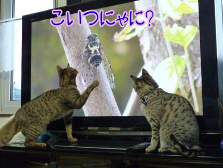5_20110130091825.jpg