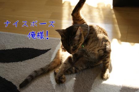 5_20110415095736.jpg