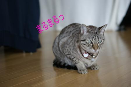 6_20100226135550.jpg