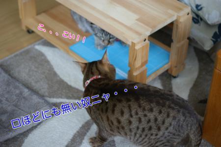 6_20100307084033.jpg