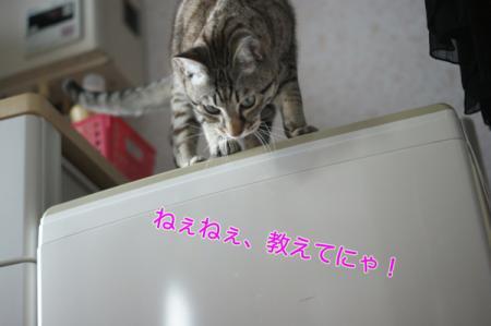 6_20100308231025.jpg