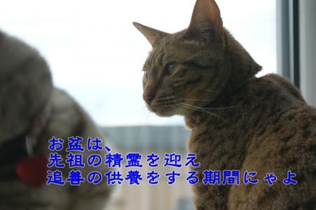 6_20100815004827.jpg