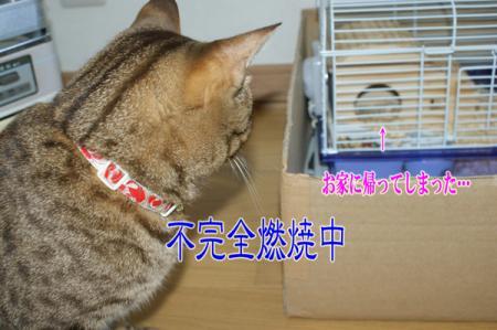 6_20100819090653.jpg