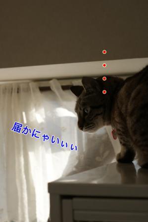 6_20100822162710.jpg