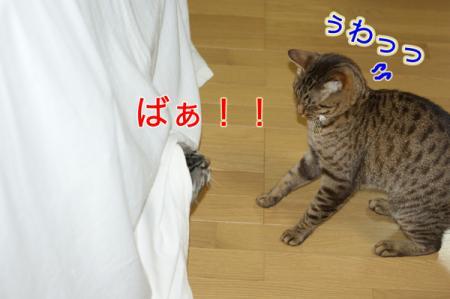 6_20100827004841.jpg