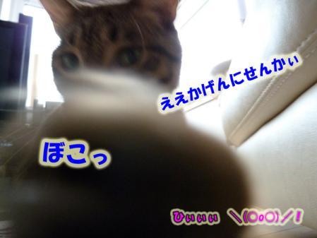 6_20100926223055.jpg