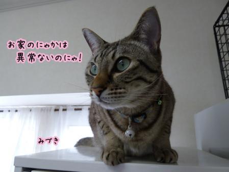 6_20101228211119.jpg