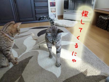 6_20110120100458.jpg