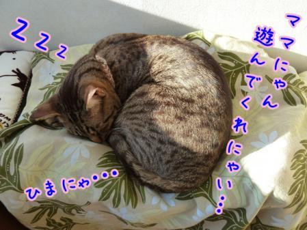 6_20110127143300.jpg