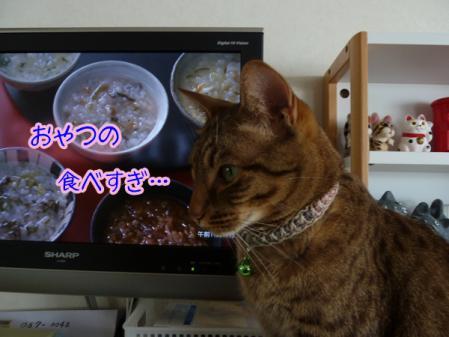 6_20110203083553.jpg