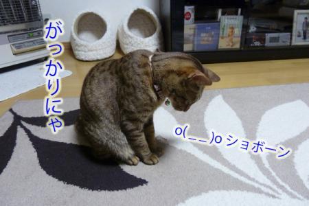 6_20110426230547.jpg
