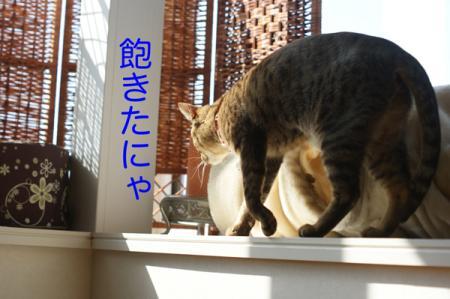7_20100227143408.jpg