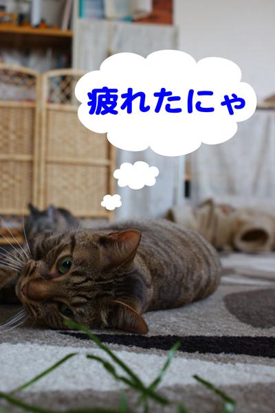 7_20100512115234.jpg