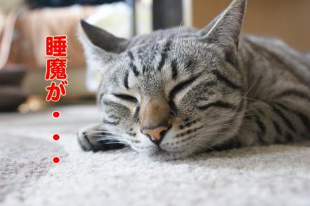 7_20100720214023.jpg