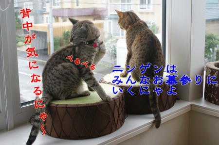 7_20100815004826.jpg