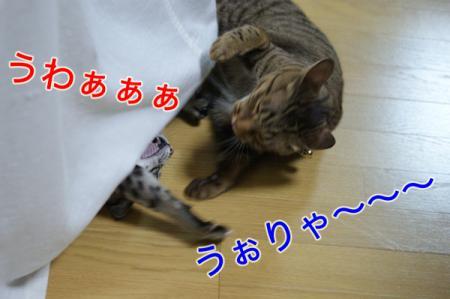 7_20100827004804.jpg