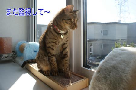 7_20100920092140.jpg
