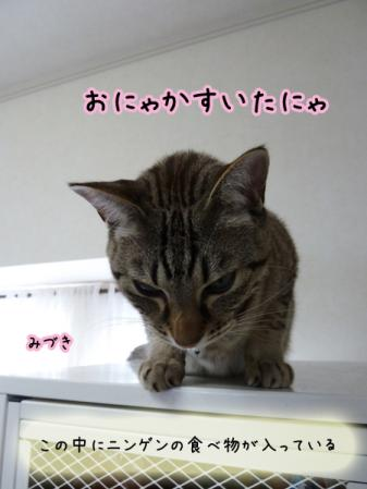 7_20101228211118.jpg