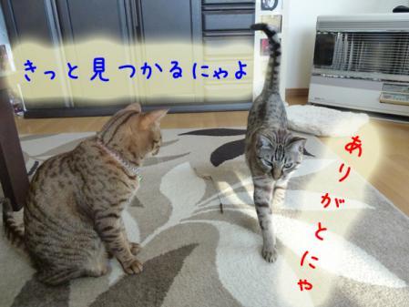 7_20110120100325.jpg