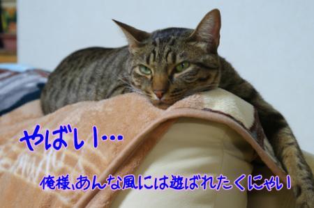 7_20110126105704.jpg