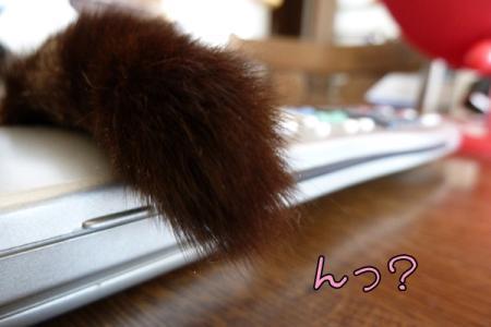 7_20110302165615.jpg