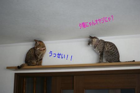 8_20100222095059.jpg