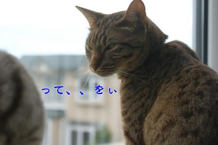 8_20100815004902.jpg