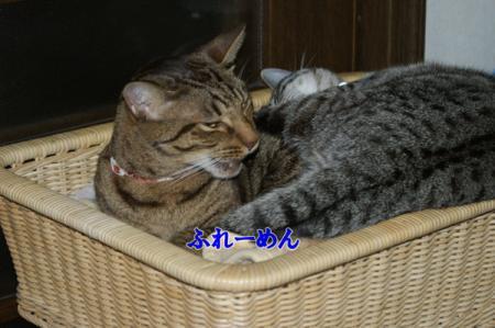 8_20101104220325.jpg