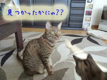 8_20110120100324.jpg
