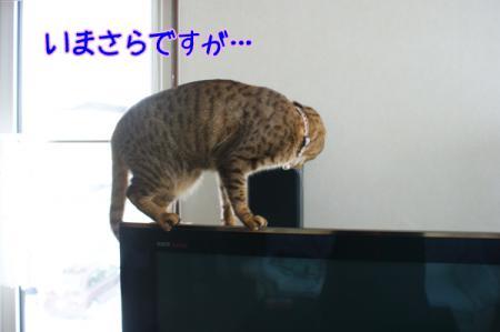 8_20110126105703.jpg