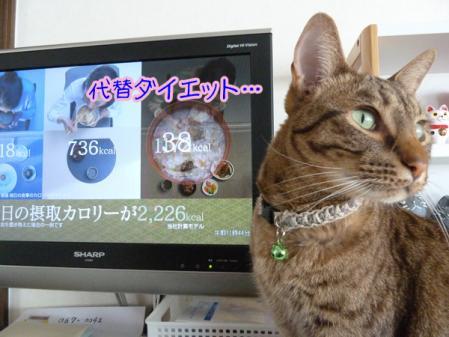 8_20110203083510.jpg