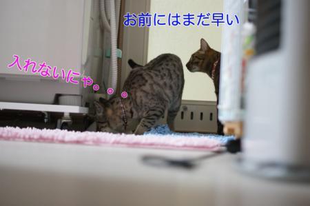 9_20100308230949.jpg