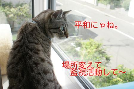 9_20100919065735.jpg
