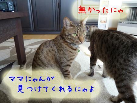 9_20110120100323.jpg