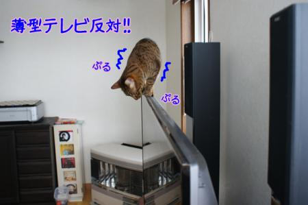 9_20110126105702.jpg