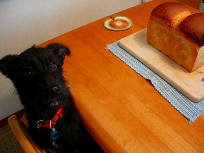 breademo71.jpg