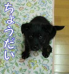 emoshichi86.jpg