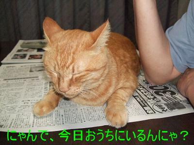 2008_10020012.jpg