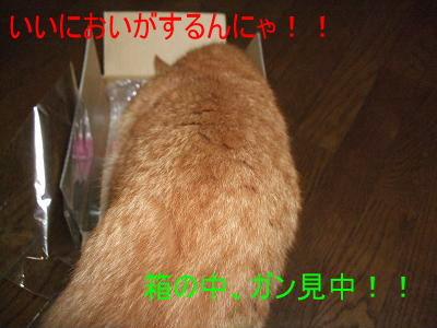 2008_10080006.jpg