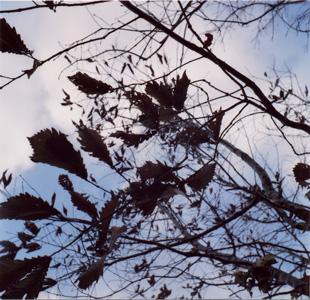 葉っぱさん
