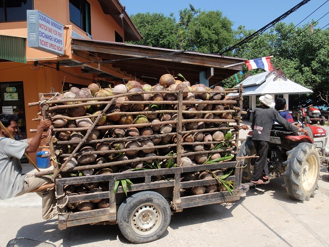 11.NOV.2010 ChiangMai-Ko Phayam 135