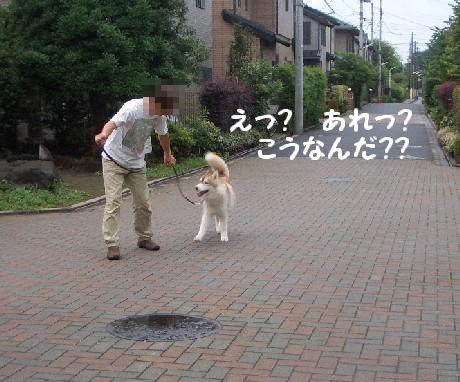 20060721001143.jpg