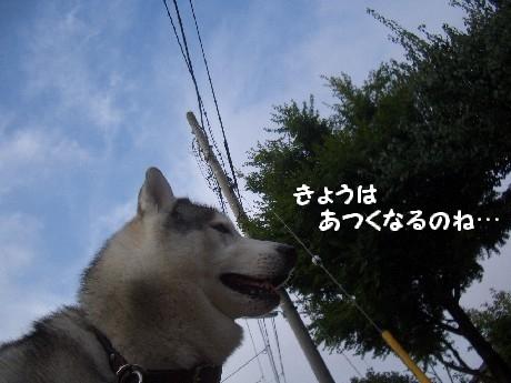CIMG5089.jpg